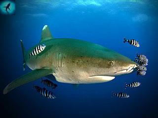рыба плывет туда где клюет
