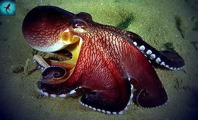 животные морей и океанов картинки
