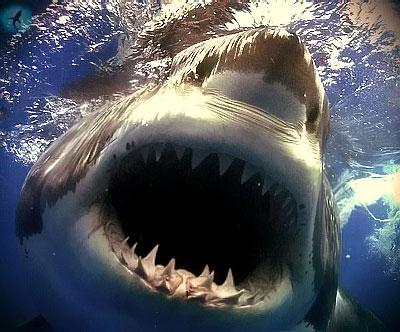 акулы есть в море: