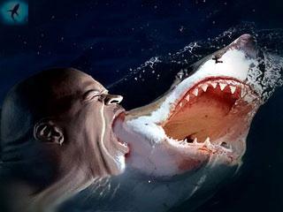 прикольная съедобная акула