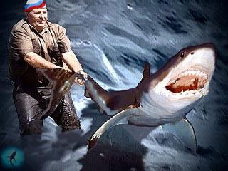 анекдоты про акул